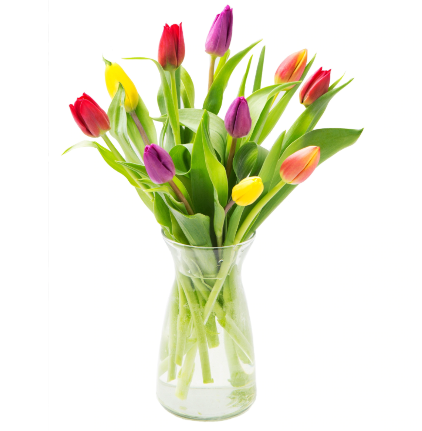 10 Multicolored Tulips